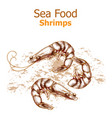 shrimps sea food isolated line art style vector image