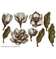 set hand drawn colored magnolia flowers vector image