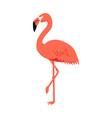 Cute pink flamingo vector image