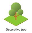 decorative tree icon isometric style vector image vector image