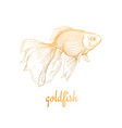 goldfish drawing sketch vector image vector image