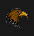 mascot eagle logo sports club falcon head emblem vector image vector image