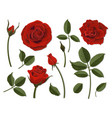 set of scarlet rose flower parts vector image vector image
