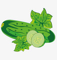 vegetable ripe cucumber vector image vector image