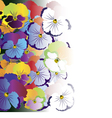 Colored pansy flowers on white background vector image vector image