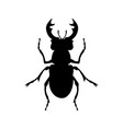 stag beetle silhouette vector image