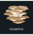Branch of oyster mushroom Pleurotus ostreatus vector image