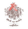 christmas evergreen floral decor vector image