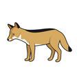 coyote vector image vector image