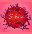 sakura branches with text on pink background vector image vector image