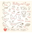 Set drawings of poultry and egg for design menus vector image