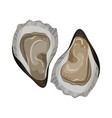 detailed flat icon of open oyster gourmet vector image