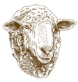 engraving drawing of sheep head vector image