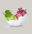 juicy sweet grape in milk splash vector image vector image