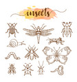 set insects doodle sketch vector image