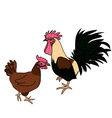 rooster and hen vector image