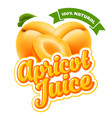 apricot juice vector image vector image