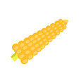 cartoon yellow corn isolated on white background vector image