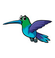 cute humming bird on white background vector image