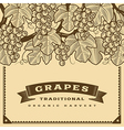 Retro grapes harvest card brown vector image vector image