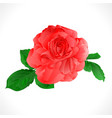 rose pink and leaves on a white background vector image vector image