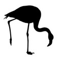 silhouette bird flamingo on a white background vector image vector image