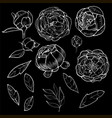 a set botanical pions vector image vector image