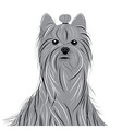 Dog yorkshire terrier portrait of a Domestic Dog vector image
