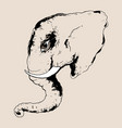 head elephant vector image