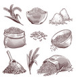 sketch rice vintage hand drawn asian grains and vector image vector image
