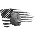 design head pitbull with american flag vector image vector image