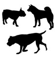 dogs silhouettes -05 vector image