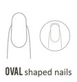 nail shape oval vector image