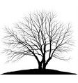 tree silhouette oak without vector image