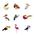 birds are different species vector image vector image