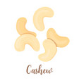 group of cashew nuts isolated on white vector image vector image