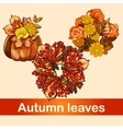 Three bright seasonal bouquet and decorations vector image vector image