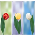 Three tulips banner vector image vector image