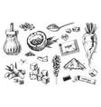 hand drawn sugar icons set vector image vector image