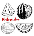 set of hand drawn watermelon on white background vector image vector image