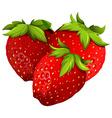 Fresh strawberries on white background vector image
