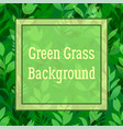 green flowers and grass vector image