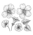 hand drawn monochrome hibiscus and bindweed vector image vector image
