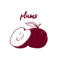 line art fruit plims hand drawn vector image