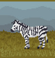 pixel cartoon zebra on a grass vector image