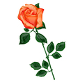 Single Orange Rose vector image vector image