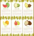 watermelon ambarella cupuacu melon guava vector image vector image