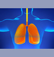 x-ray human body with sick lungs pneumonia virus vector image
