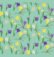 colorful crocus flowers vector image vector image