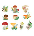autumn collection or forestl mushrooms and plants vector image
